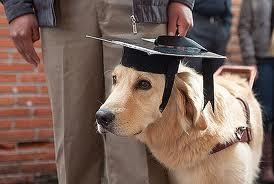 David Romero se convirtió el año pasado en el primer husky siberiano en licenciarse en Historia.